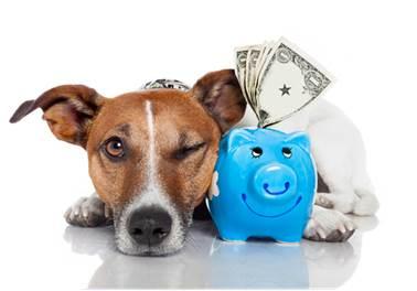 Vacine seu bolso: gestão financeira em pet shop