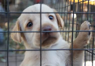 Resolução causa polêmica em pet shops sobre suposta proibição