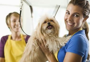 A ascensão dos serviços de Pet Shop