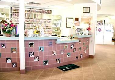 Como abrir um Pet Shop? Dicas e sugestões