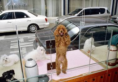 Novas regras para o setor de pet shop entram em vigor em todo país