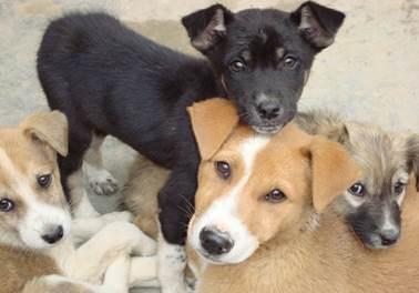 Projeto de lei obriga pet shops a disponibilizarem espaço e animais para adoção