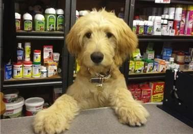 Não foque só no preço, pense em criar valor no seu Pet Shop