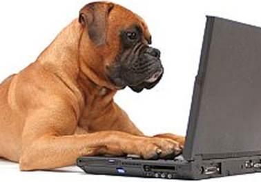 4 estratégias de marketing digital para Pet Shop