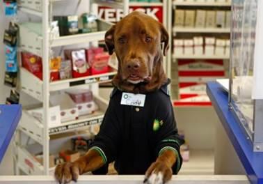 Pet shops investem em atendimento e atraem clientes