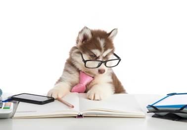 A importância do controle financeiro para seu Pet Shop
