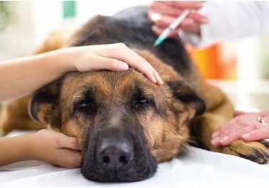 Seguradoras apostam em plano de saúde para animais de estimação
