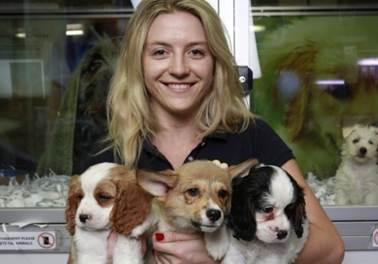 Pet shops deverão garantir saúde e segurança para animais de estimação