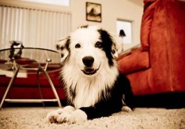 País tem mais cães de estimação que crianças