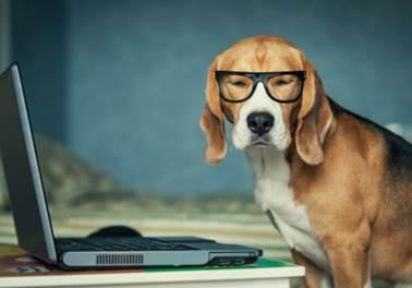 Brasileiro gasta, em média, R$ 185 em compras online para pets