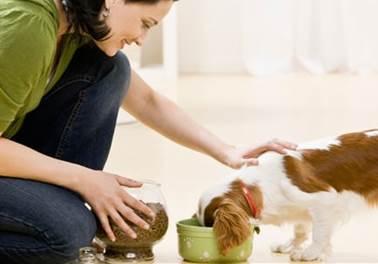 5 métricas para melhorar o atendimento em seu pet shop