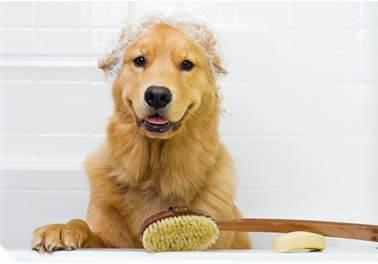 Banho e tosa: 4 maneiras de aumentar o faturamento desses serviços