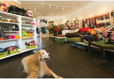 Boa disposição dos produtos contribui para aumento das vendas do Pet Shop