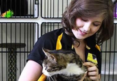 Como contratar os melhores funcionários para um pet shop?