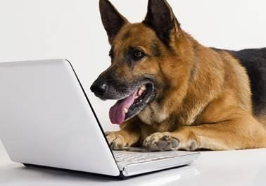 Pet shop online: veja como ter sucesso no empreendimento