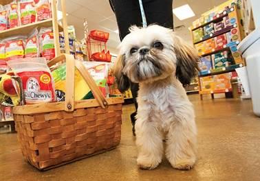 Dicas do que não pode faltar em um Pet Shop