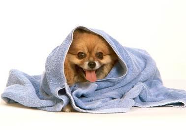 Pet Shop: um negócio de sucesso e alta lucratividade
