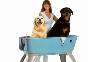Como contratar e manter os melhores funcionários num Pet Shop