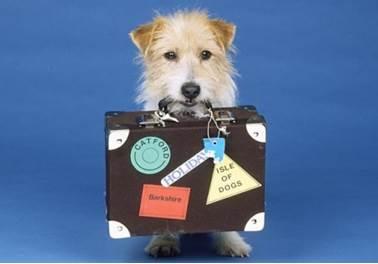 5 erros que afastam os clientes do seu pet shop