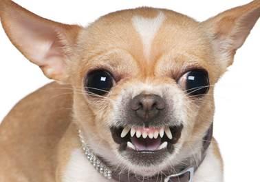 Como lidar com clientes difíceis no pet shop?