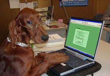 5 dicas simples para otimizar a gestão de seu pet shop