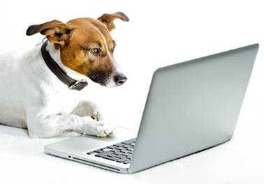 Marketplace é aliado dos pet shops para alavancar venda de produtos e serviços