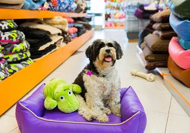 5 dicas indispensáveis para aumentar as vendas do seu Pet Shop