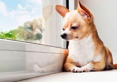 4 erros comuns que atrapalham o crescimento do Pet Shop