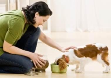 Serviço de pet sitter: Ganhe dinheiro cuidando de cães