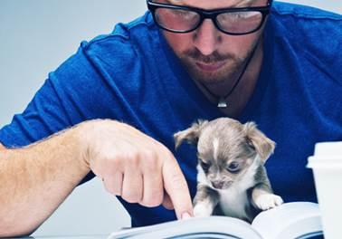 O que é um plano de marketing e como elaborá-lo para um pet shop?