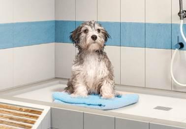Sustentabilidade para Pet Shops