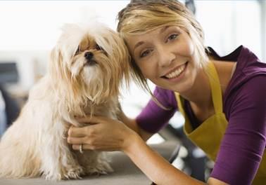 Treinamento é palavra-chave para funcionários de Pet Shop