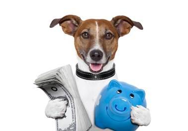Como escolher um sócio para abrir um pet shop?