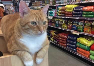 Quatro informações fundamentais para você abrir e ter sucesso com uma pet shop