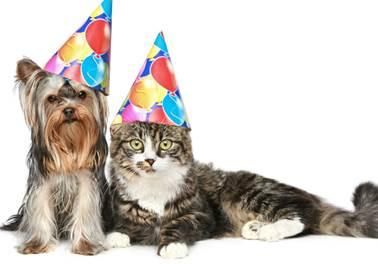 Marketing Pet Shop: Aprenda a criar estratégias de marketing para datas comemorativas