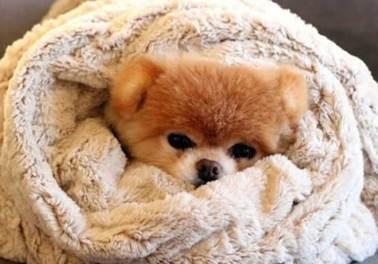 Como manter o movimento do Pet Shop no inverno?