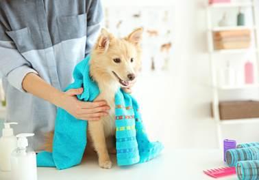 Equipe preparada, pet shop preferido