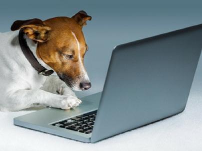 4 dicas para montar um pet shop virtual