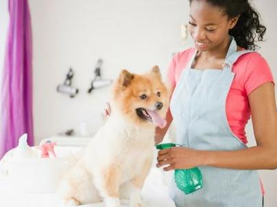 7 ações eficientes para mudar sua gestão de pet shops agora