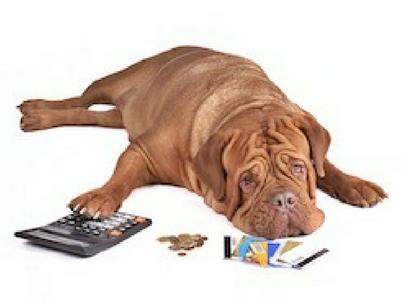 Relatório de Gestão – O indicador para um pet shop de sucesso