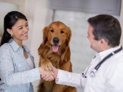 Três ferramentas de CRM simples para o seu Pet Shop