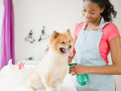 Como saber se a estratégia de Marketing Digital da sua clínica veterinária e petshop está gerando resultados?