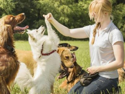 11 Passos para iniciar um Negócio Pet