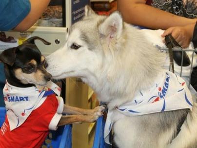 Pet shop online: como começar?