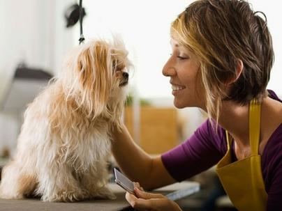 Como Contratar Profissionais Qualificados na sua Pet Shop