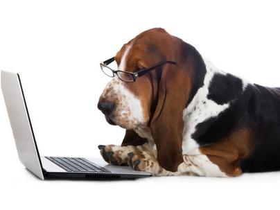 Remuneração dos Sócios nos Negócios Pet