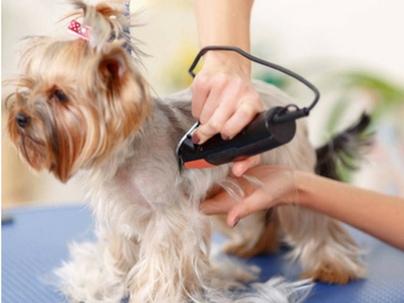 Como não perder seus clientes para o Pet Shop do vizinho