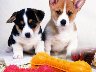 Como criar promoções de vendas que vão impulsionar seu Pet Shop
