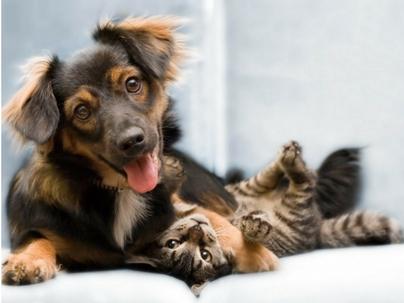 Rapport em vendas para clínicas veterinárias e pet shops: o que é?