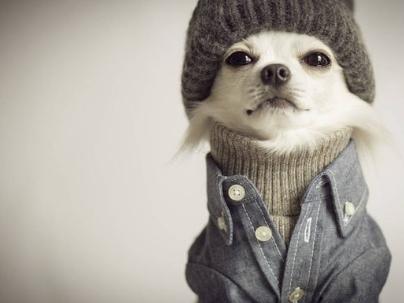 Como ganhar dinheiro com roupa para cachorros